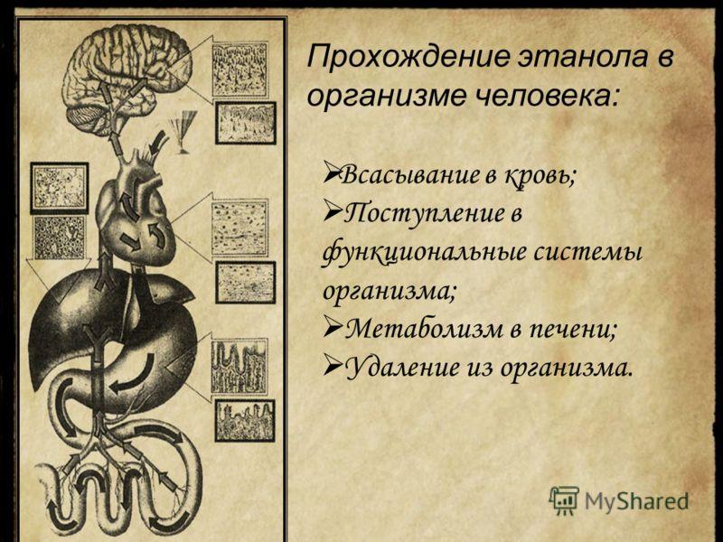 Прохождение этанола в организме человека: Всасывание в кровь; Поступление в функциональные системы организма; Метаболизм в печени; Удаление из организма.