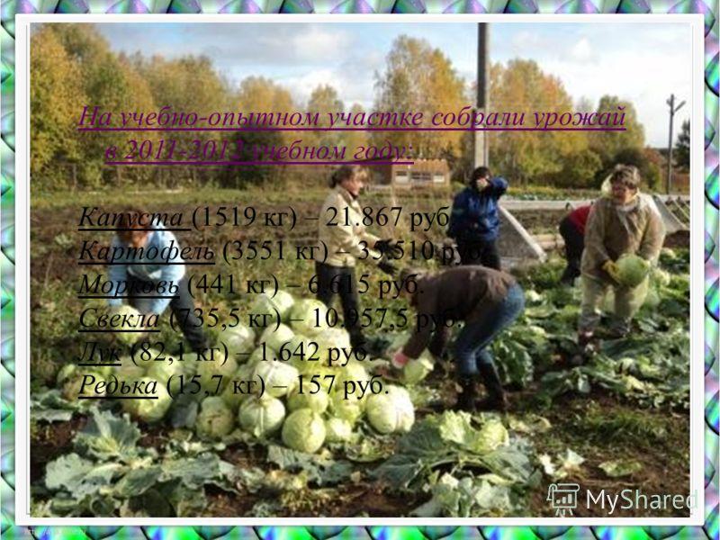 На учебно-опытном участке собрали урожай в 2011-2012 учебном году: Капуста (1519 кг) – 21.867 руб. Картофель (3551 кг) – 35.510 руб. Морковь (441 кг) – 6.615 руб. Свекла (735,5 кг) – 10.957,5 руб. Лук (82,1 кг) – 1.642 руб. Редька (15,7 кг) – 157 руб