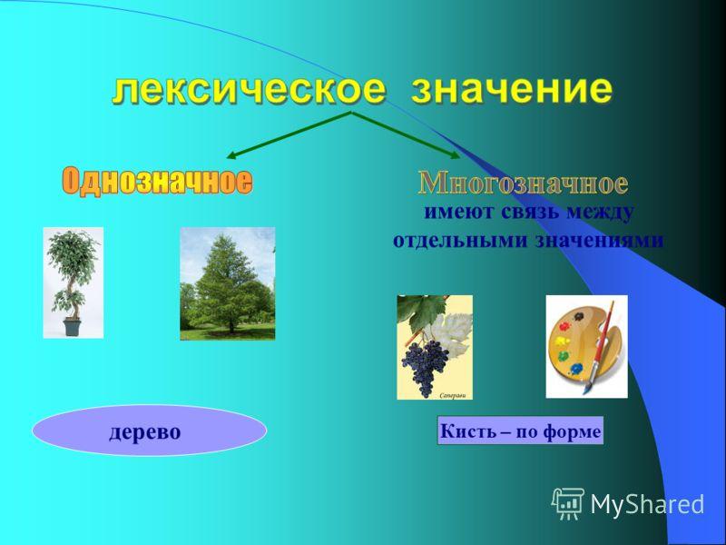 имеют связь между отдельными значениями дерево Кисть – по форме
