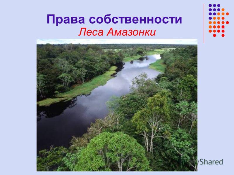 Права собственности Леса Амазонки