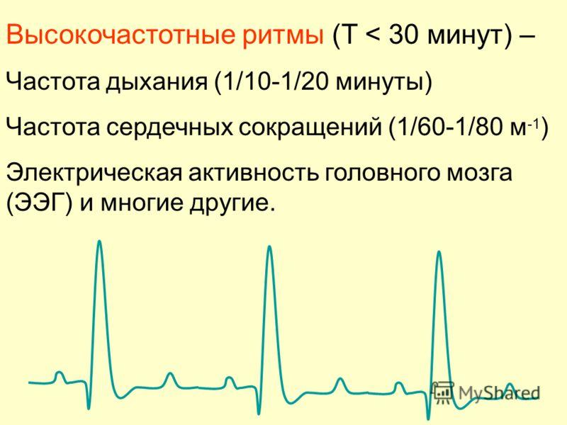 Высокочастотные ритмы (T < 30 минут) – Частота дыхания (1/10-1/20 минуты) Частота сердечных сокращений (1/60-1/80 м -1 ) Электрическая активность головного мозга (ЭЭГ) и многие другие.