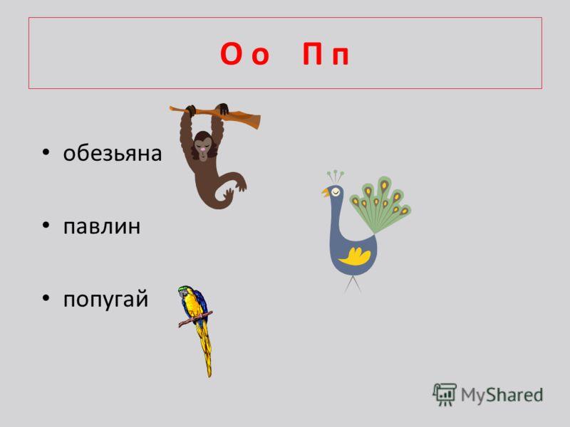 О о П п обезьяна павлин попугай