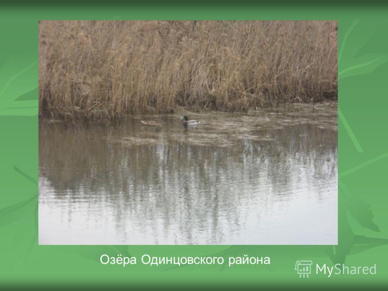 Озёра Одинцовского района