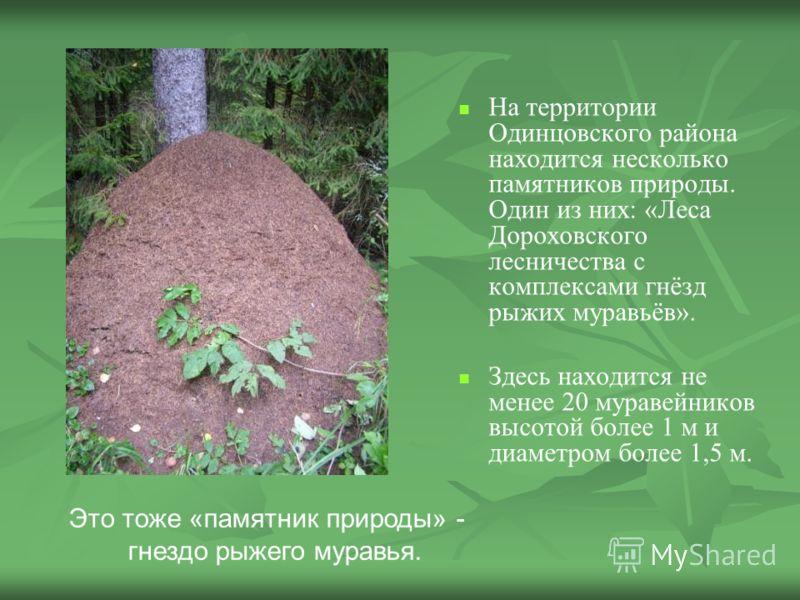 На территории Одинцовского района находится несколько памятников природы. Один из них: «Леса Дороховского лесничества с комплексами гнёзд рыжих муравьёв». Здесь находится не менее 20 муравейников высотой более 1 м и диаметром более 1,5 м. Это тоже «п