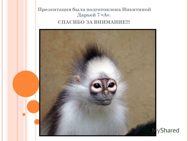 Презентация была подготовлена Никитиной Дарьей 7 «А». СПАСИБО ЗА ВНИМАНИЕ!!!