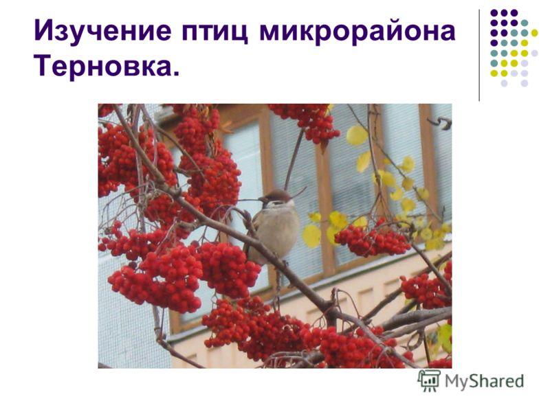 Изучение птиц микрорайона Терновка.