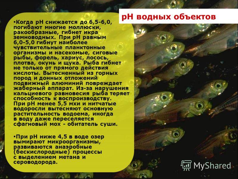Когда рН снижается до 6,5-6,0, погибают многие моллюски, ракообразные, гибнет икра земноводных. При рН равным 6,0-5,0 гибнут наиболее чувствительные планктонные организмы и насекомые, сиговые рыбы, форель, хариус, лосось, плотва, окунь и щука. Рыба г