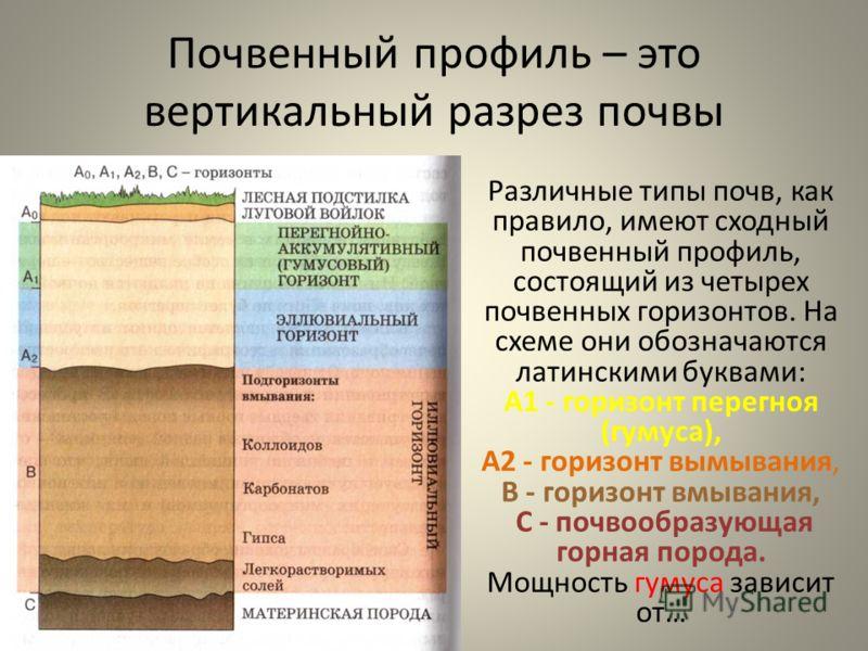 Почвенный профиль – это вертикальный разрез почвы Различные типы почв, как правило, имеют сходный почвенный профиль, состоящий из четырех почвенных горизонтов. На схеме они обозначаются латинскими буквами: А1 - горизонт перегноя (гумуса), А2 - горизо