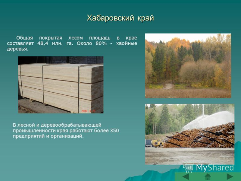 Хабаровский край Общая покрытая лесом площадь в крае составляет 48,4 млн. га. Около 80% - хвойные деревья. В лесной и деревообрабатывающей промышленности края работают более 350 предприятий и организаций.