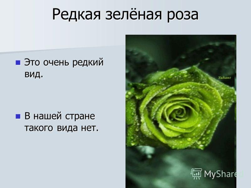 Редкая зелёная роза Это очень редкий вид. Это очень редкий вид. В нашей стране такого вида нет. В нашей стране такого вида нет.