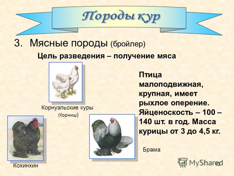 10 3.Мясные породы (бройлер) Цель разведения – получение мяса Птица малоподвижная, крупная, имеет рыхлое оперение. Яйценоскость – 100 – 140 шт. в год. Масса курицы от 3 до 4,5 кг. Брама Корнуэльские куры (Корниш ) Кохинхин