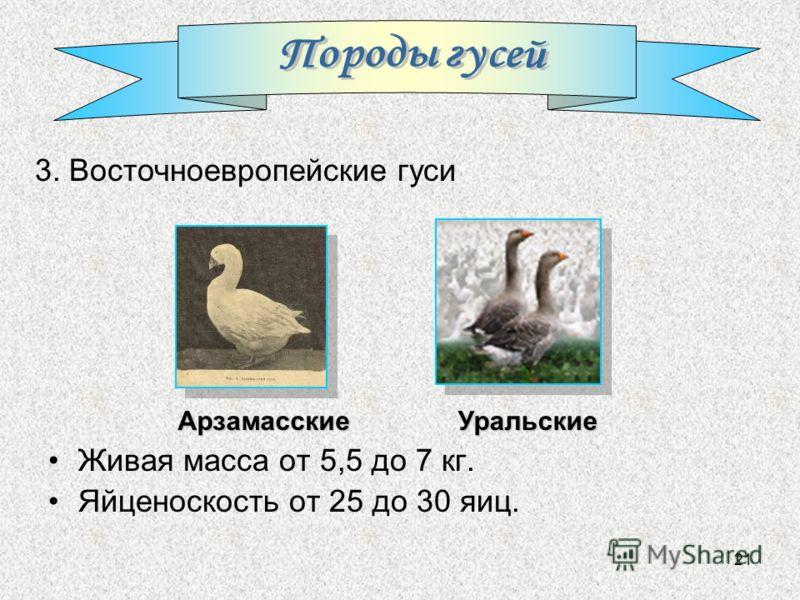 21 Живая масса от 5,5 до 7 кг. Яйценоскость от 25 до 30 яиц. Арзамасские 3. Восточноевропейские гуси Уральские