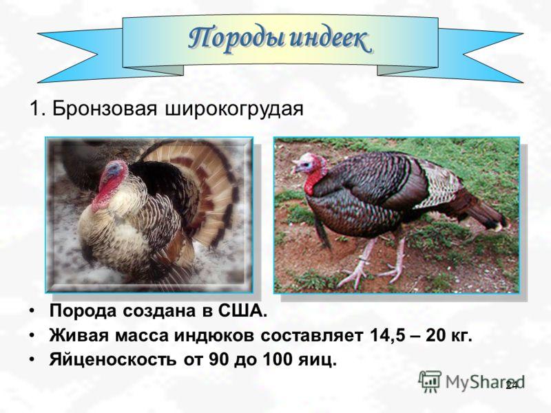 24 Порода создана в США. Живая масса индюков составляет 14,5 – 20 кг. Яйценоскость от 90 до 100 яиц. 1. Бронзовая широкогрудая