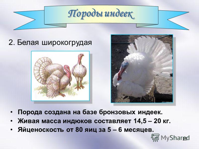 25 Порода создана на базе бронзовых индеек. Живая масса индюков составляет 14,5 – 20 кг. Яйценоскость от 80 яиц за 5 – 6 месяцев. 2. Белая широкогрудая