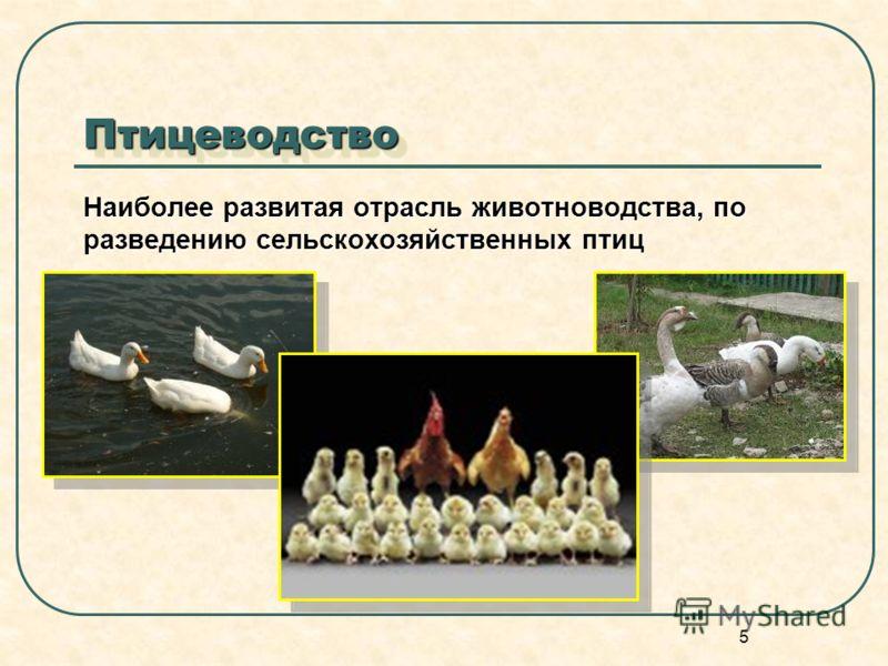 5 ПтицеводствоПтицеводство Наиболее развитая отрасль животноводства, по разведению сельскохозяйственных птиц