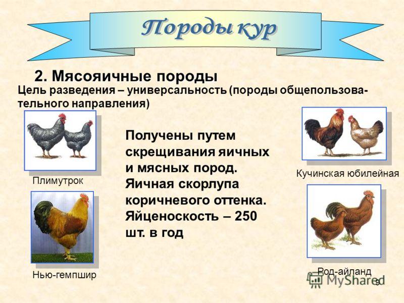 9 Цель разведения – универсальность (породы общепользова- тельного направления) Получены путем скрещивания яичных и мясных пород. Яичная скорлупа коричневого оттенка. Яйценоскость – 250 шт. в год Плимутрок Род-айланд Нью-гемпшир Кучинская юбилейная 2