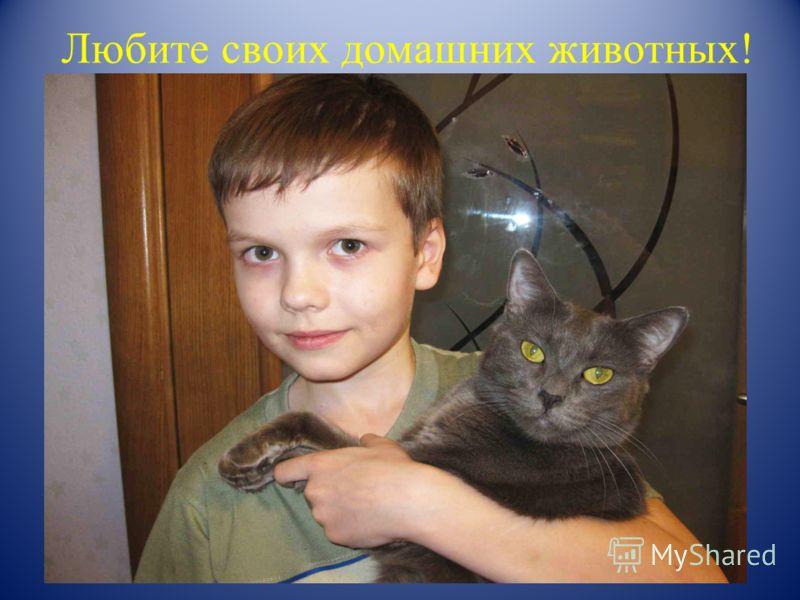 ВЫВОДЫ 1.Кошки охотятся потому, что являются хищниками; 2.Кошки едят мышей; 3. Мышей едят не все кошки.