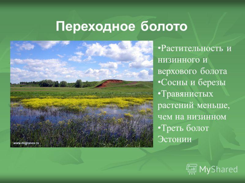 Переходное болото Растительность и низинного и верхового болота Сосны и березы Травянистых растений меньше, чем на низинном Треть болот Эстонии