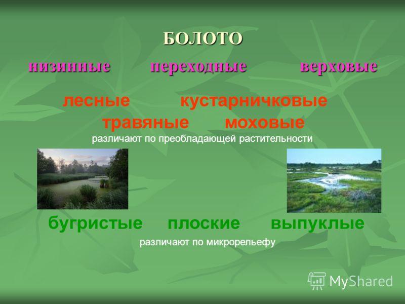 БОЛОТО низинные переходные верховые лесные кустарничковые травяные моховые различают по преобладающей растительности бугристые плоские выпуклые различают по микрорельефу