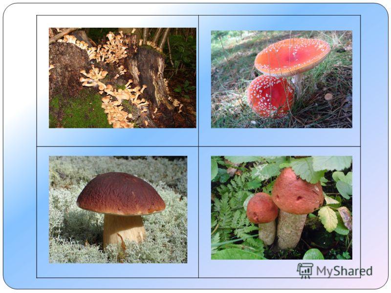 Мухомор – не съедобный гриб.