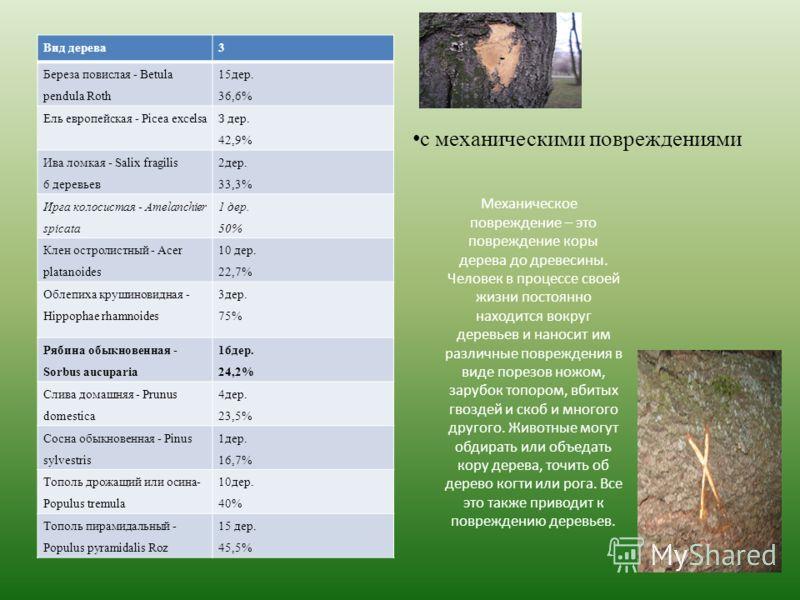 Вид дерева3 Береза повислая - Betula pendula Roth 15дер. 36,6% Ель европейская - Picea excelsa З дер. 42,9% Ива ломкая - Salix fragilis 6 деревьев 2дер. 33,3% Ирга колосистая - Amelanchier spicata 1 дер. 50% Клен остролистный - Acer platanoides 10 де