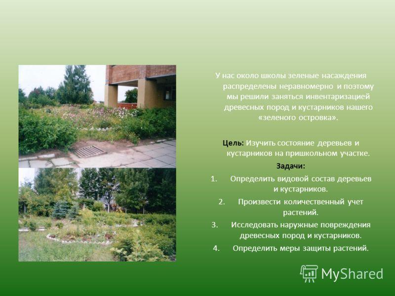 У нас около школы зеленые насаждения распределены неравномерно и поэтому мы решили заняться инвентаризацией древесных пород и кустарников нашего «зеленого островка». Цель: Изучить состояние деревьев и кустарников на пришкольном участке. Задачи: 1.Опр