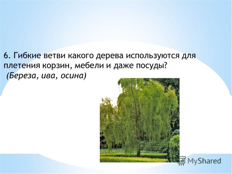 6. Гибкие ветви какого дерева используются для плетения корзин, мебели и даже посуды? (Береза, ива, осина)
