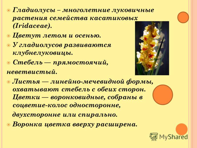 Гладиолусы – многолетние луковичные растения семейства касатиковых (Iridaceae). Цветут летом и осенью. У гладиолусов развиваются клубнелуковицы. Стебель прямостоячий, неветвистый. Листья линейно-мечевидной формы, охватывают стебель с обеих сторон. Цв