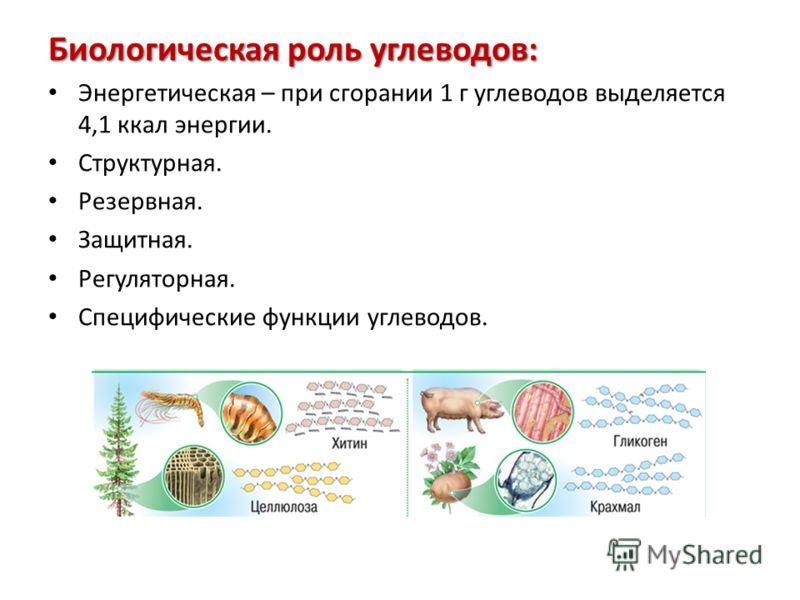 Биологическая роль углеводов: Энергетическая – при сгорании 1 г углеводов выделяется 4,1 ккал энергии. Структурная. Резервная. Защитная. Регуляторная. Специфические функции углеводов.