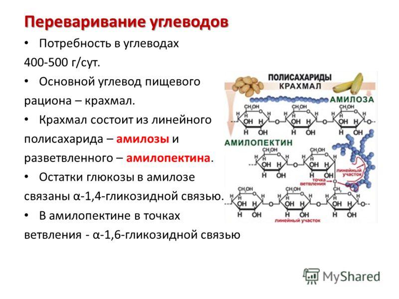 Переваривание углеводов Потребность в углеводах 400-500 г/сут. Основной углевод пищевого рациона – крахмал. Крахмал состоит из линейного полисахарида – амилозы и разветвленного – амилопектина. Остатки глюкозы в амилозе связаны α-1,4-гликозидной связь