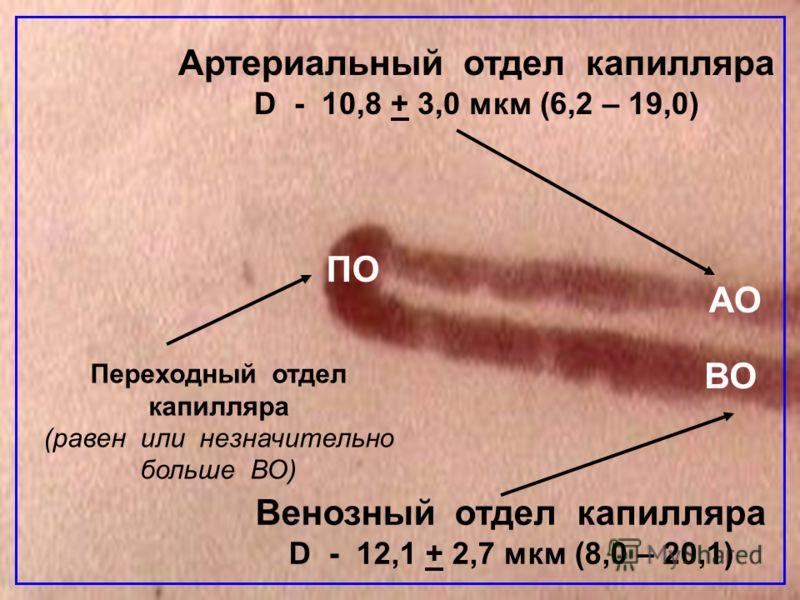 Артериальный отдел капилляра D - 10,8 + 3,0 мкм (6,2 – 19,0) Венозный отдел капилляра D - 12,1 + 2,7 мкм (8,0 – 20,1) Переходный отдел капилляра (равен или незначительно больше ВО) АО ВО ПО