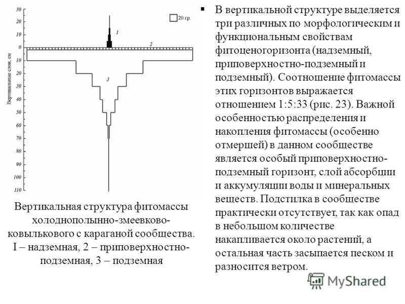 Вертикальная структура фитомассы холоднополынно-змеевково- ковылькового с караганой сообщества. I – надземная, 2 – приповерхностно- подземная, 3 – подземная В вертикальной структуре выделяется три различных по морфологическим и функциональным свойств