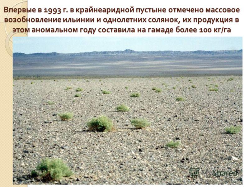 Впервые в 1993 г. в крайнеаридной пустыне отмечено массовое возобновление ильинии и однолетних солянок, их продукция в этом аномальном году составила на гамаде более 100 кг / га