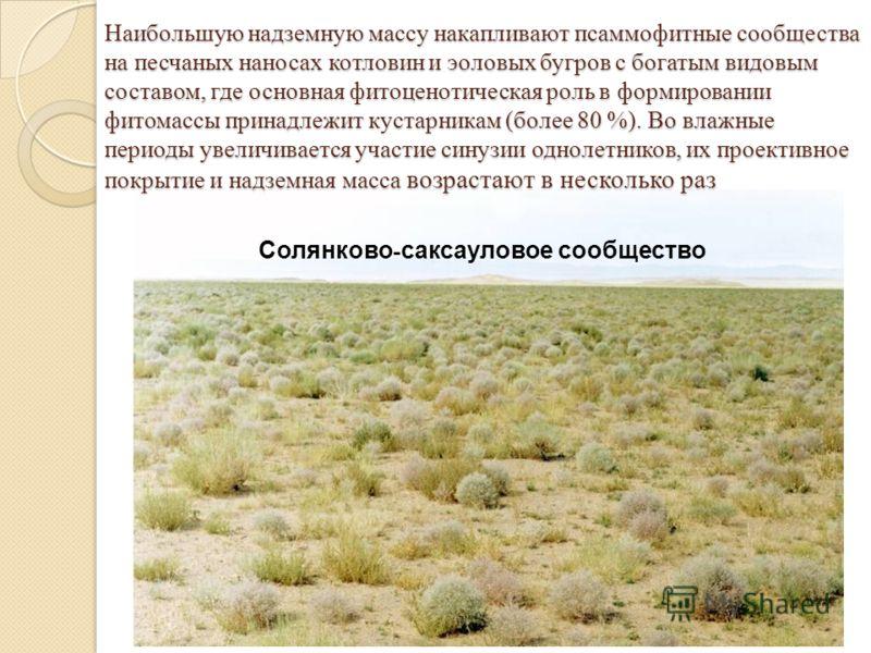 Наибольшую надземную массу накапливают псаммофитные сообщества на песчаных наносах котловин и эоловых бугров с богатым видовым составом, где основная фитоценотическая роль в формировании фитомассы принадлежит кустарникам (более 80 %). Во влажные пери