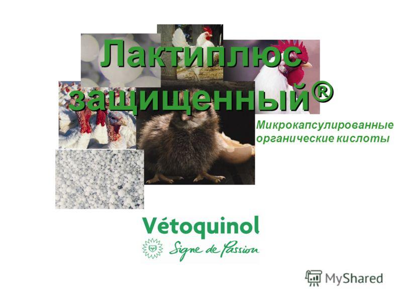 Лактиплюс защищенный ® Микрокапсулированные органические кислоты