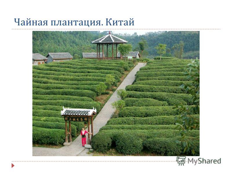 Чайная плантация. Китай