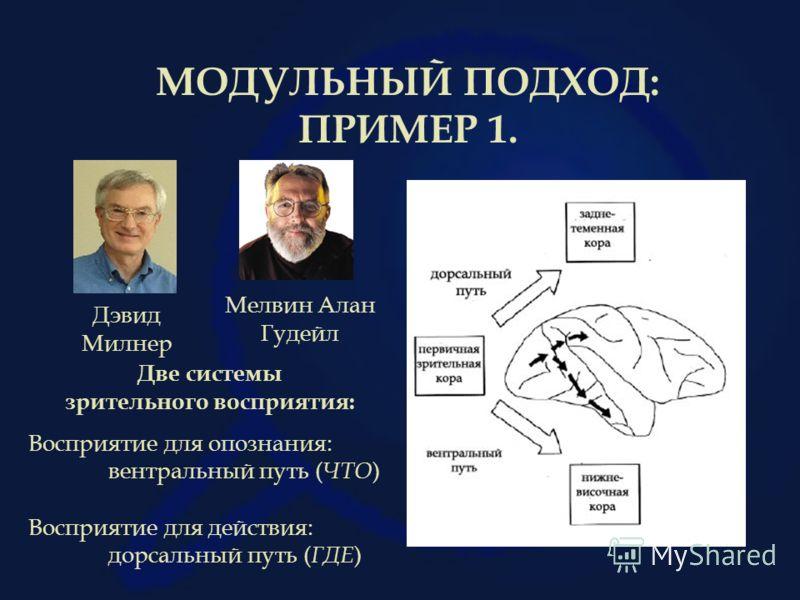 МОДУЛЬНЫЙ ПОДХОД: ПРИМЕР 1. Мелвин Алан Гудейл Две системы зрительного восприятия: Восприятие для опознания: вентральный путь ( ЧТО ) Восприятие для действия: дорсальный путь ( ГДЕ ) Дэвид Милнер