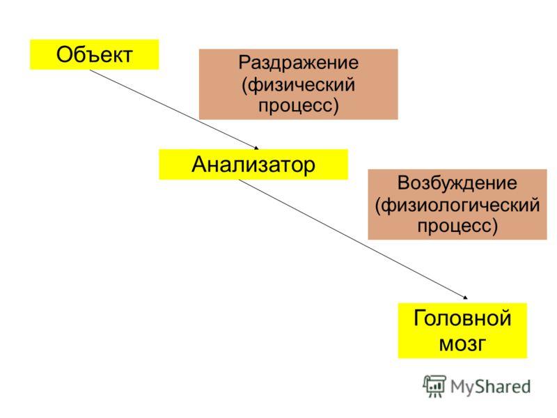 Раздражение (физический процесс) Возбуждение (физиологический процесс) Объект Анализатор Головной мозг