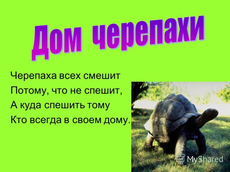Черепаха всех смешит Потому, что не спешит, А куда спешить тому Кто всегда в своем дому.
