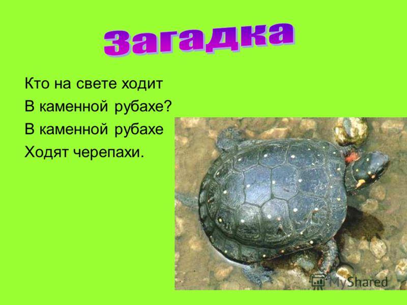 Кто на свете ходит В каменной рубахе? В каменной рубахе Ходят черепахи.