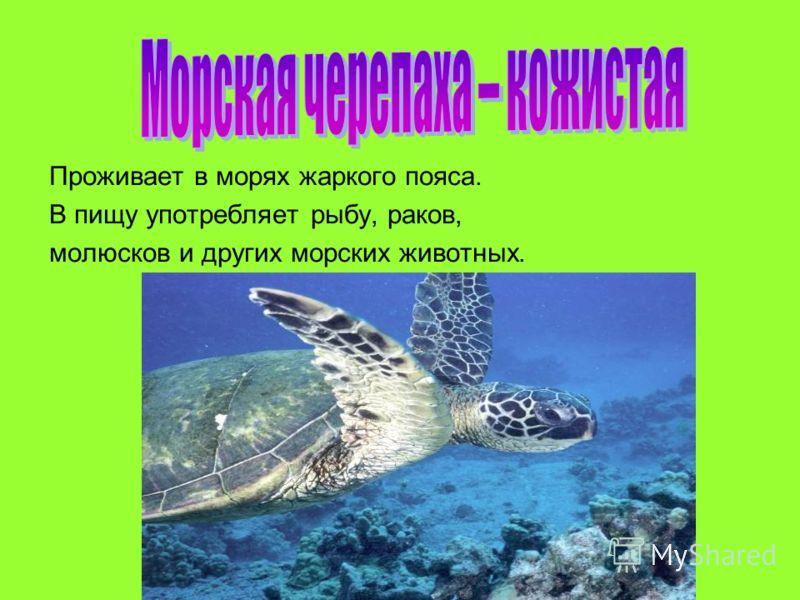 Проживает в морях жаркого пояса. В пищу употребляет рыбу, раков, молюсков и других морских животных.