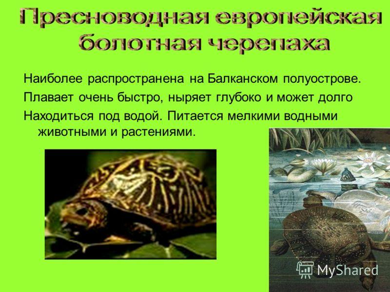 Наиболее распространена на Балканском полуострове. Плавает очень быстро, ныряет глубоко и может долго Находиться под водой. Питается мелкими водными животными и растениями.