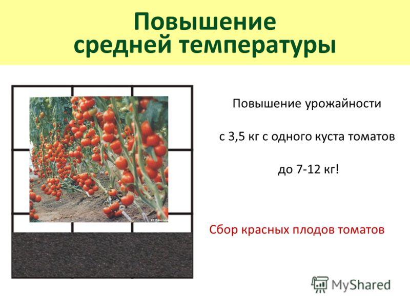 Повышение средней температуры Повышение урожайности с 3,5 кг с одного куста томатов до 7-12 кг! Сбор красных плодов томатов