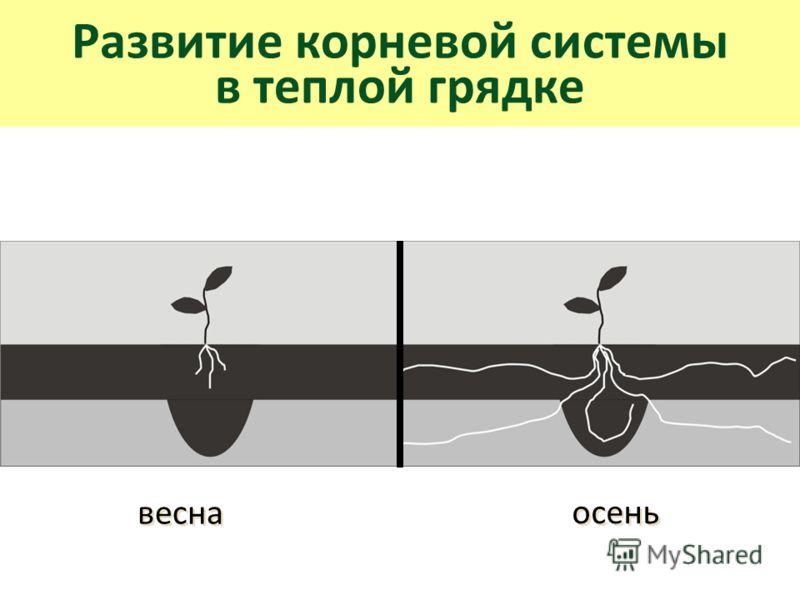 Развитие корневой системы в теплой грядке весна осень