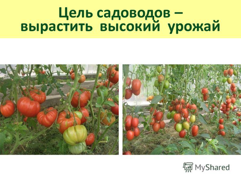Цель садоводов – вырастить высокий урожай