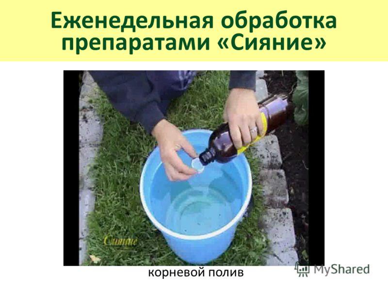 Еженедельная обработка препаратами «Сияние» корневой полив