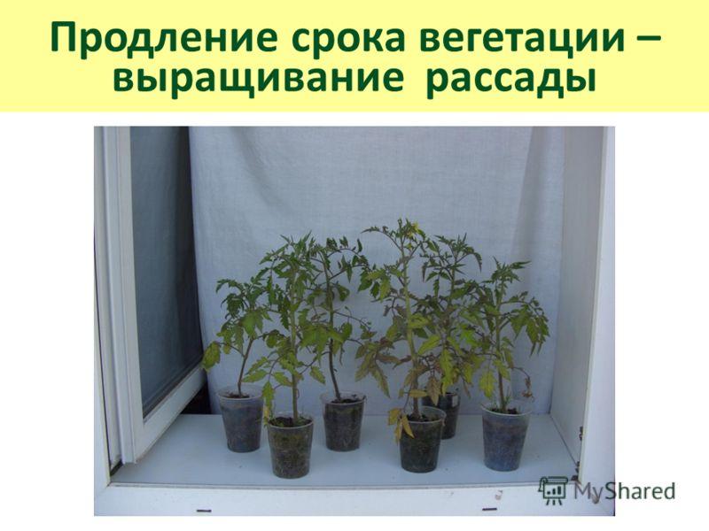 Продление срока вегетации – выращивание рассады
