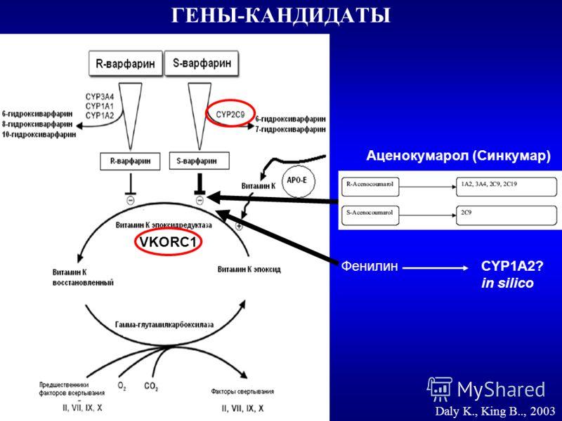 ГЕНЫ-КАНДИДАТЫ Daly K., King B.., 2003 ФенилинCYP1А2? in silico Аценокумарол (Синкумар) VKORC1