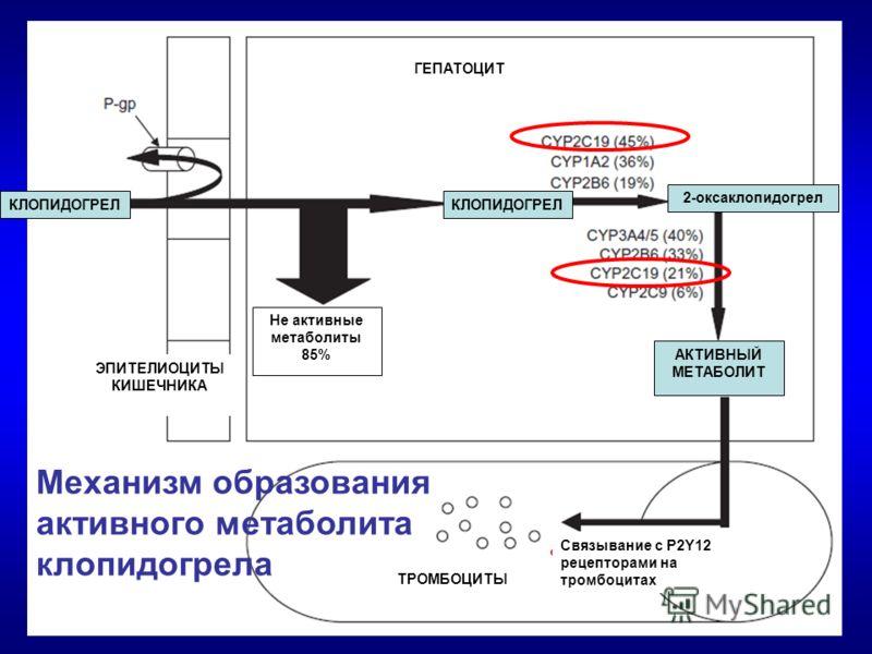 КЛОПИДОГРЕЛ 2-оксаклопидогрел АКТИВНЫЙ МЕТАБОЛИТ Связывание с P2Y12 рецепторами на тромбоцитах ТРОМБОЦИТЫ ГЕПАТОЦИТ ЭПИТЕЛИОЦИТЫ КИШЕЧНИКА Не активные метаболиты 85% Механизм образования активного метаболита клопидогрела
