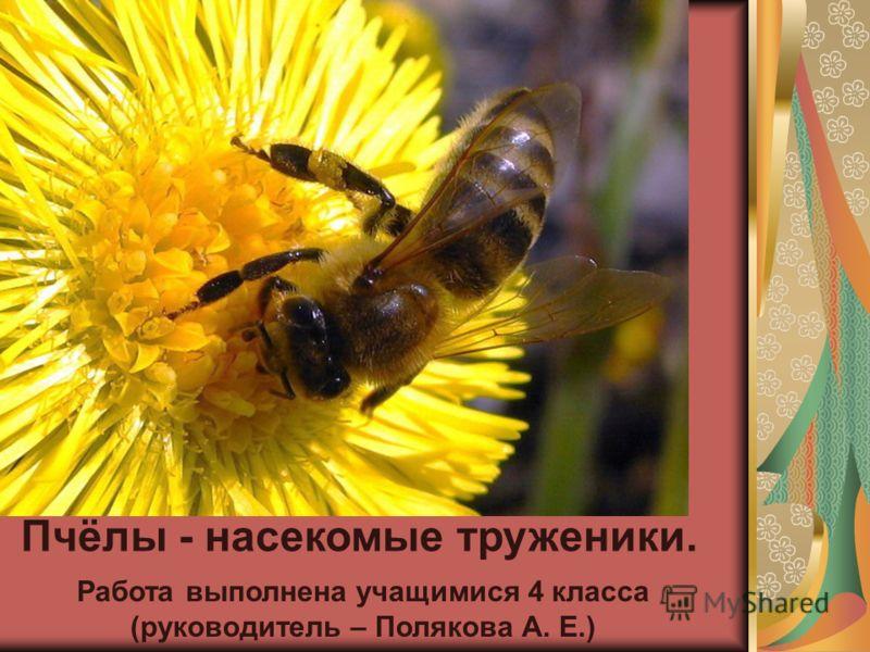 Пчёлы - насекомые труженики. Работа выполнена учащимися 4 класса (руководитель – Полякова А. Е.)